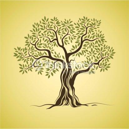 albero di ulivo arte vettoriale thinkstock