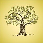 Olive tree. Olive oil. Vector  olive tree.