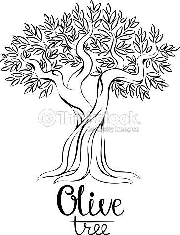 olive tree coloring page - olivenbaum vektorillustration vektorgrafik thinkstock