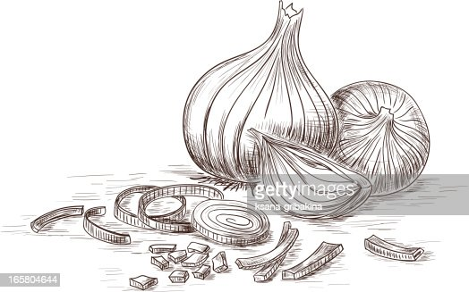 Onion Vector Art | Getty Images