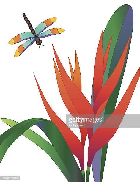orange heliconia und Libelle
