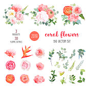 Orange ranunculus, pink rose, hydrangea, coral carnation, garden flowers, greenery and decorative plants big vector set. Living coral 2019 trendy color collection. Elements are isolated and editable
