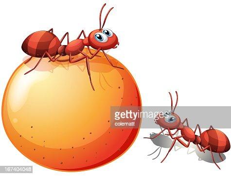 Orange with two ants : Vector Art
