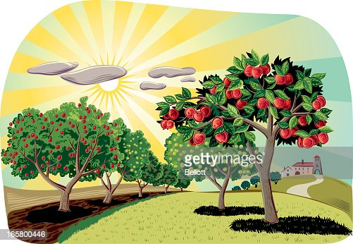 Apple Orchard Stock Illustrations And Cartoons | Getty Images