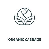 Organic cabbage vector line icon, outline concept, linear sign