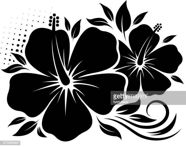 Hibiscus Vector Art And Graphics Getty Images
