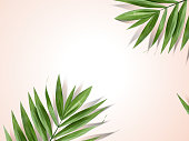 Palm leaves background, decorative summer plant design elements in 3d illustration