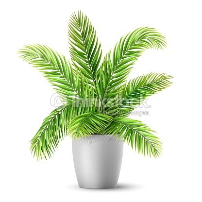 Palm tree leaves in a pot : stock vector
