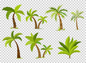 Palm trees isolated on transparent background. Beautiful vectro palma tree set vector illustration.