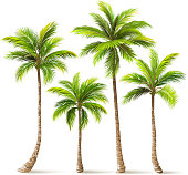 Palm trees with shadow isolated on white. Vector illustration