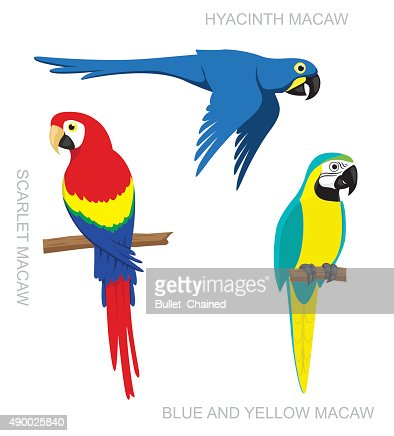 Parrot Macaw Cartoon Vector Illustration : stock vector