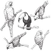 Hand drawn set of tropical  birds. Parrots and toucan sitting on branches sketch.