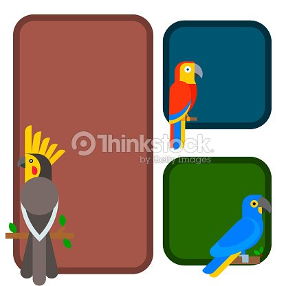 Parrots birds breed species animal flayer brochure nature tropical parakeets education colorful pet vector illustration