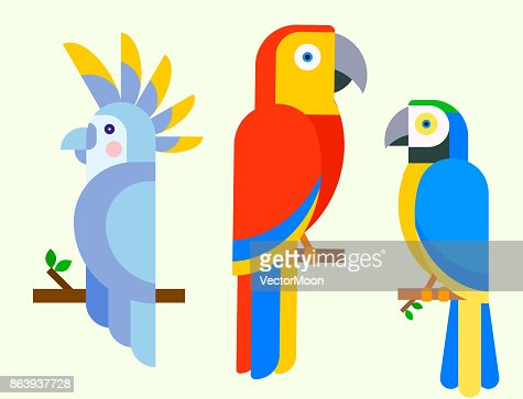 Parrots birds breed species animal nature tropical parakeets education colorful pet vector illustration : stock vector