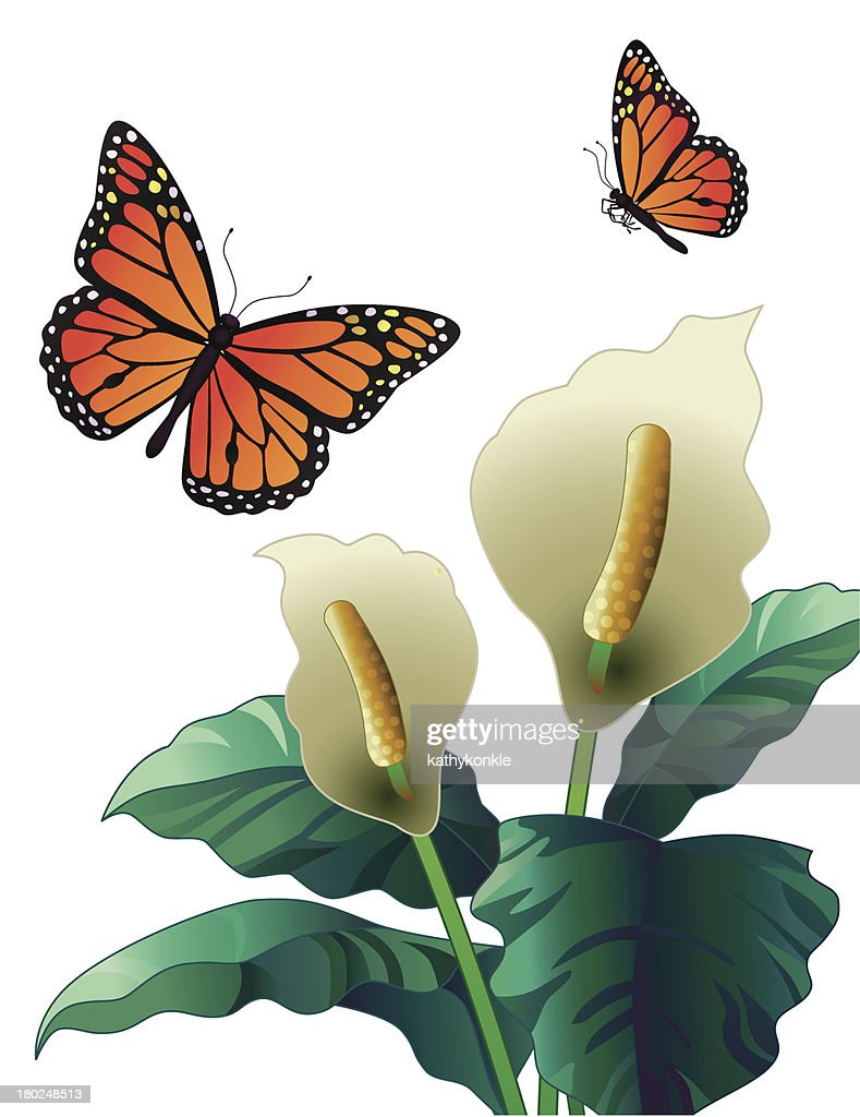 peace lily and monarch butterflies vector art getty images