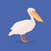 Pelican bird on a branch. Isolated vector illustration of a flat