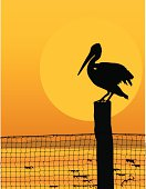 Silhouette of a pelican on a pole with netting