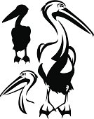 pelican bird black and white outline - vector collection of bird head design and silhouette