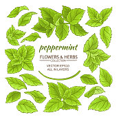 peppermint plant elements set on white background