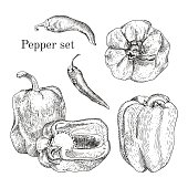 Peppers ink sketches set. Isolated. Hand drawn outline style.