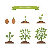 Phases plant growth. Sprout in the ground. Flat style, vector illustration.