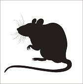 vector picture of silhouette of a rat