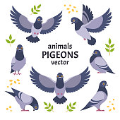 Vector illustration of grey cartoon pigeon in different poses. Isolated on white background.