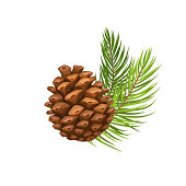 Vector pine branch with cone. Illustration in cartoon style.