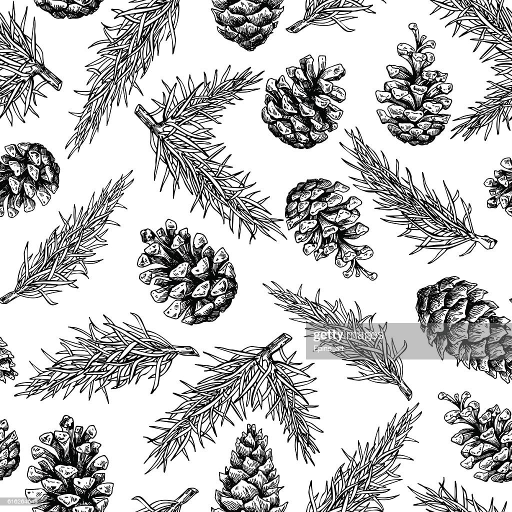 Pine cone and fir tree seamless pattern. Botanical hand drawn : Vector Art
