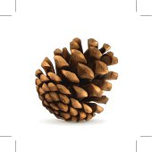 Pine cone. Eps10 vector illustration contains transparency and blending effects.