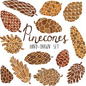 Hand drawn vector pine cones set isolated