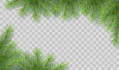 Pine tree vector spruce border. Branches of fir tree transparent background. Corner composition