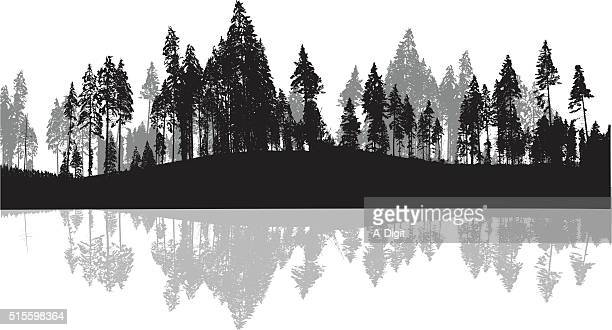 Pine Trees Silhouette Background