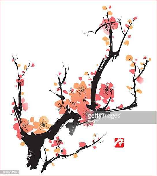 Pink blossoms on black branches over a white backdrop