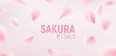 Pink sakura petals falling flower vector background. Romantic blossom sakura flower petals.