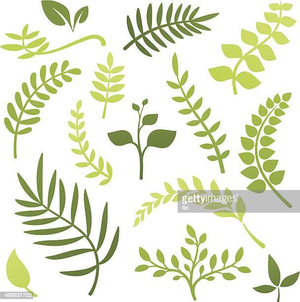 Plant Elements