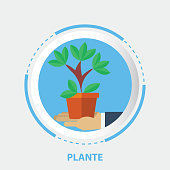 Formal Garden, Ornamental Garden, Plant, Icon, Growth