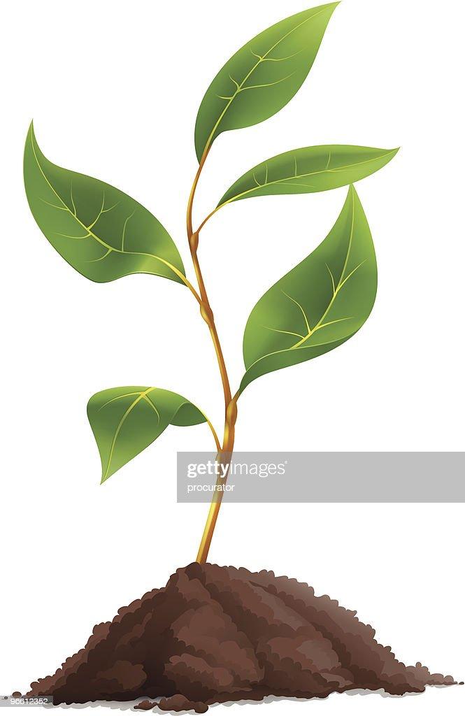 Plant : Vector Art