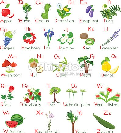 Plants alphabet vector art thinkstock - Clases de flores y sus nombres ...