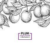 Plum branch vintage border.  Hand drawn isolated fruit frame. Summer food illustration. Detailed  botanical sketch. Great for label, menu template, packaging design.