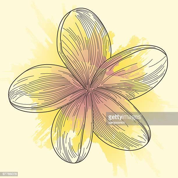 Plumeria-Frangipani-Line Art