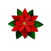 Poinsettia flower, symbol of Christmas on white Vector illustration