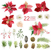 Poinsettia Flowers and Christmas Floral Elements - in Watercolor Style - vector