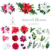 Red, white and marbled poinsettia flowers, hydrangea, peony, dahlia, orchid, red succulent, fir branch and mix of seasonal plants and herbs big vector collection.All elements are isolated and editable