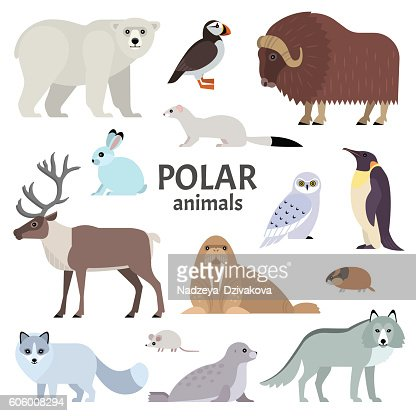 Polar animals : Clipart vectoriel