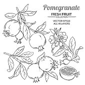 pomegranate branches vector set on white background