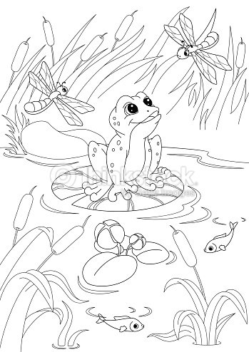 Pond Coloring Page stock vector | Thinkstock