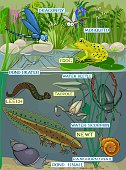 Pond ecosystem. Different pond inhabitants with title