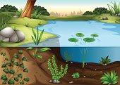 pond ecosytem