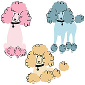 Cartoon doodle poodles isolated on white background. Vector illustration of cute purebred dogs.